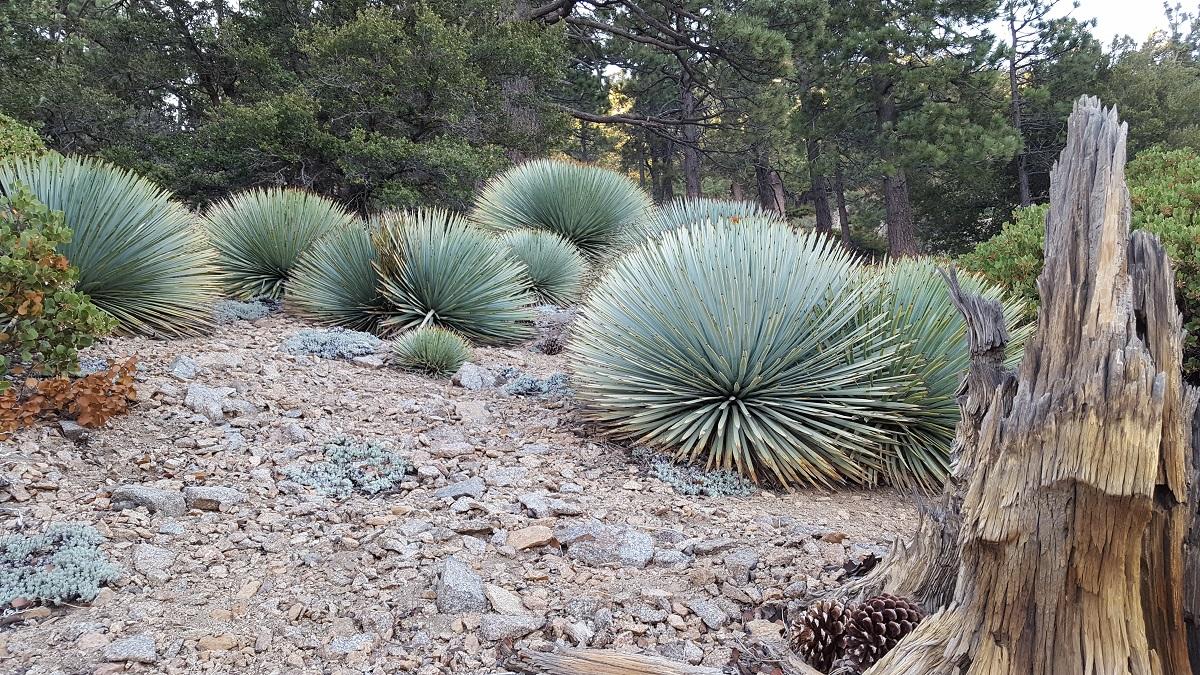 Plantes grasses en forme de boule