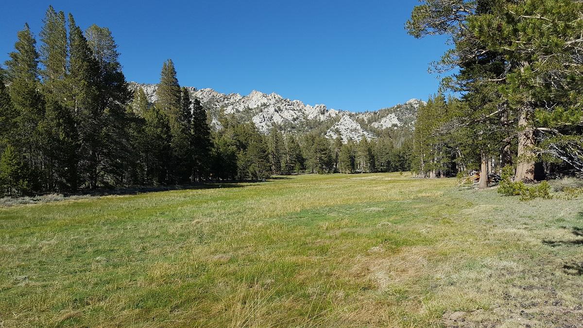 Pré d'herbe verte, sapins et montagnes - Green meadows, pine trees and mountains