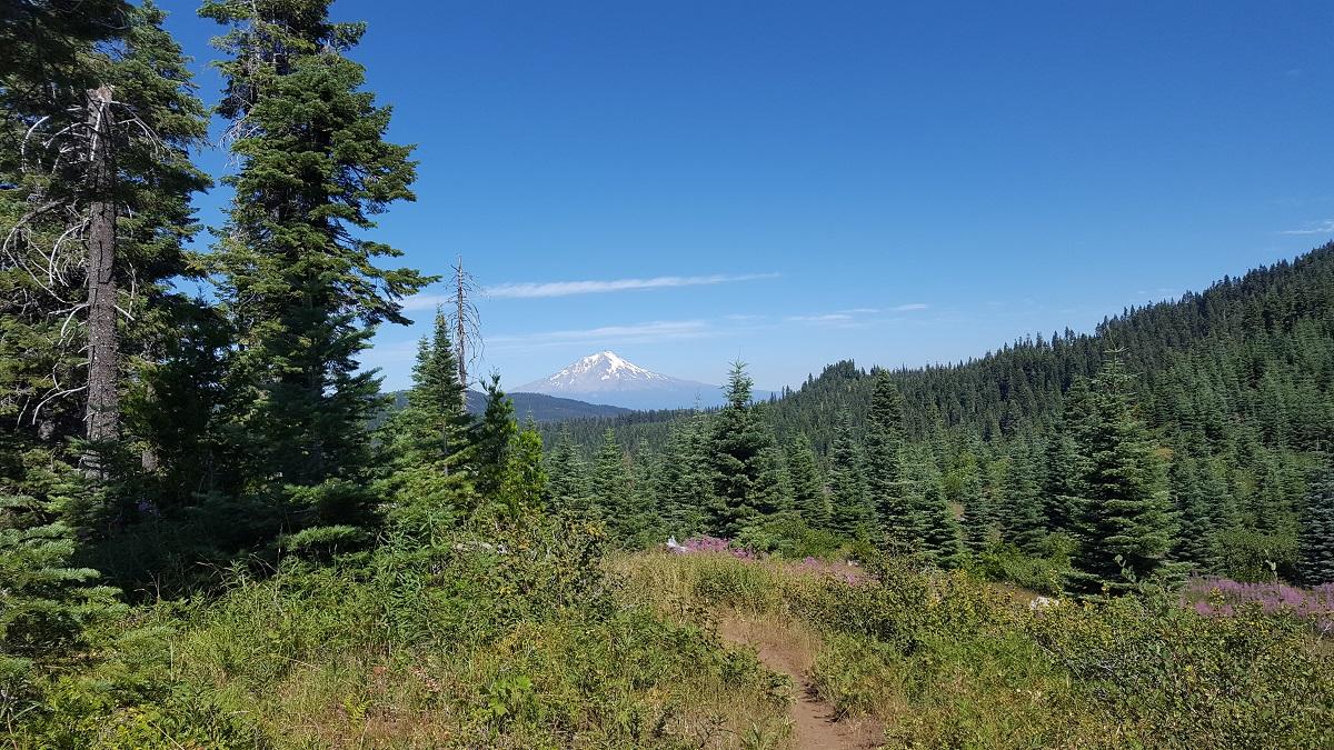 Forêt de sapins et sommet enneigé dans le lointain - Fur trees and snowy peak in the distance