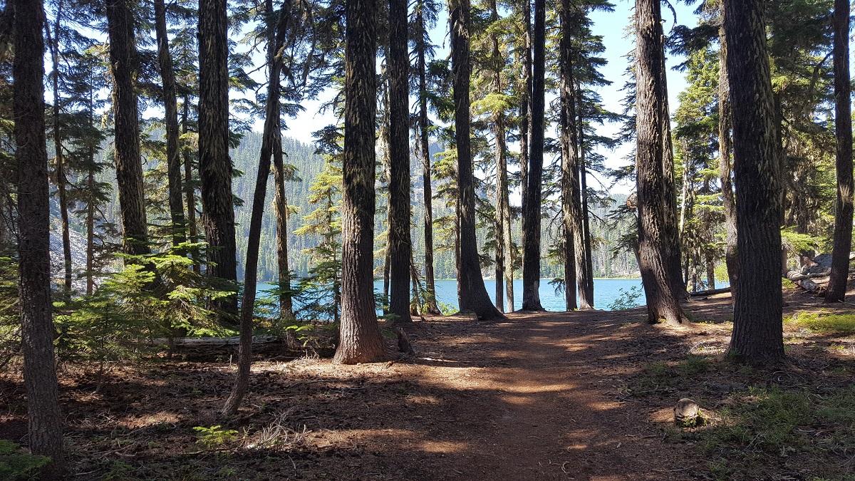 Les eaux d'un lac se laissent deviner derrière un rideau d'arbres - Blue waters of a lake appear behind forest trees